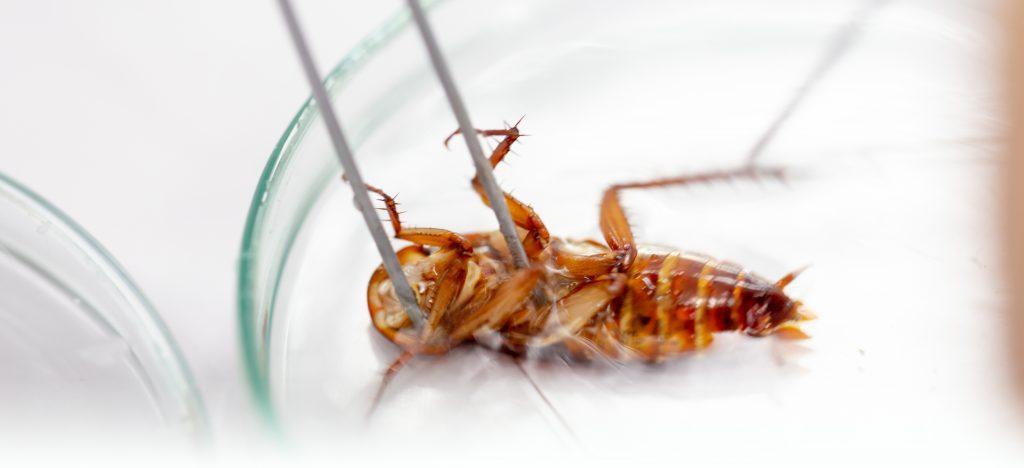 EWS Pest control